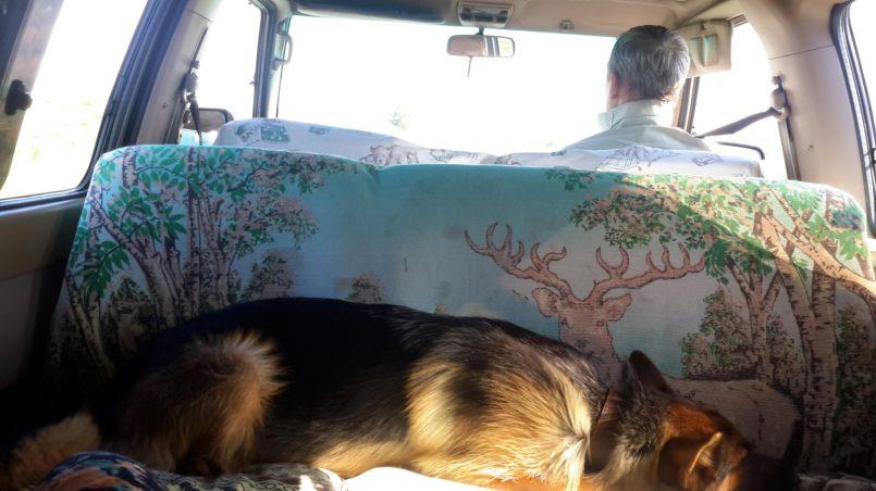 Собака спит в машине