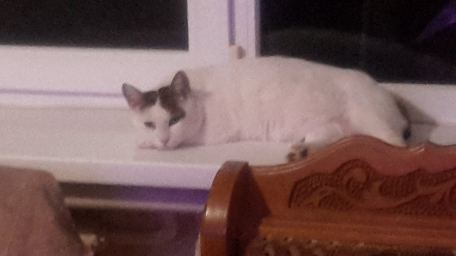 Кот лежит на подоконнике