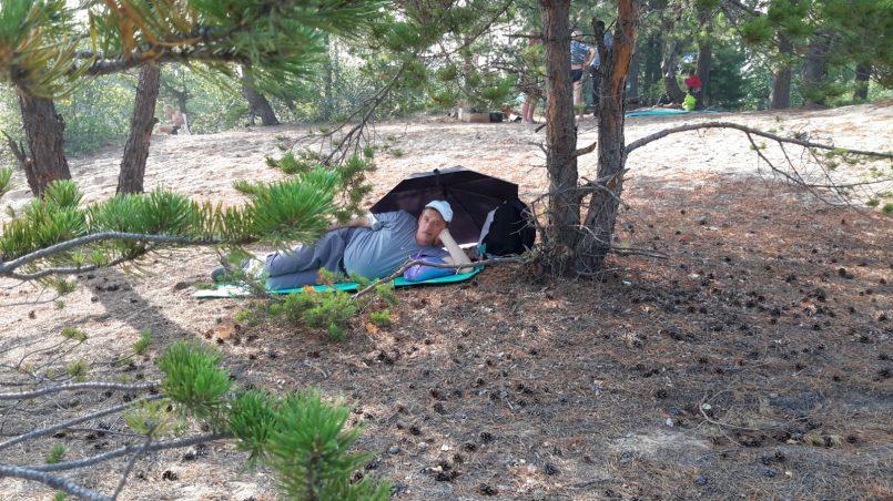 Отдых под кедром