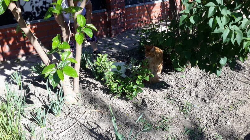 Наш и соседский коты