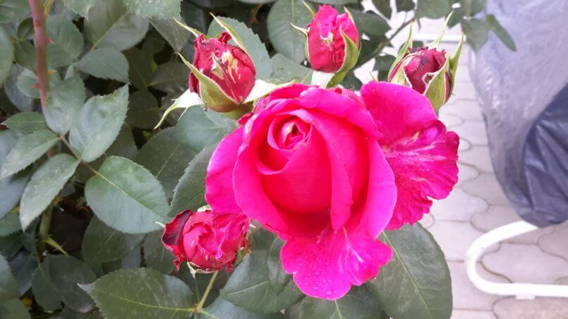 Цветок и бутоны