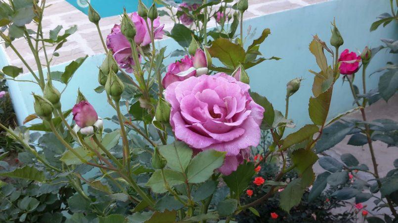 Цветы у бассейна