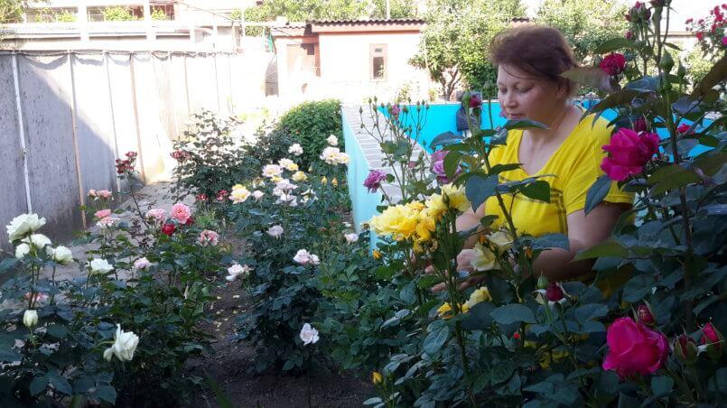 Утренние ароматы цветов