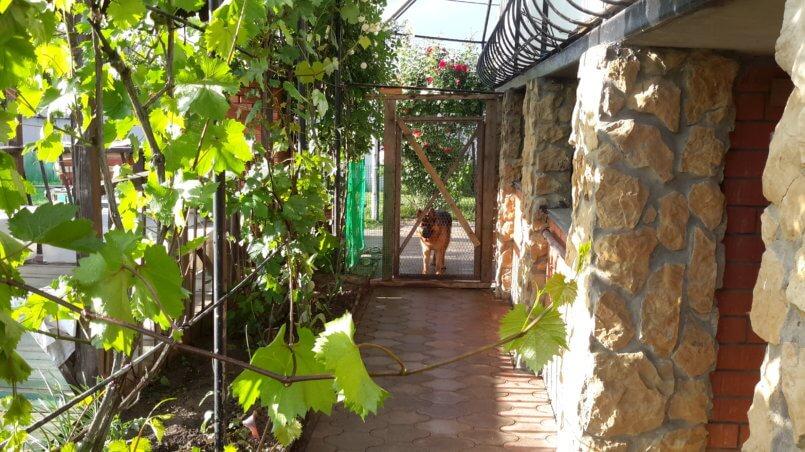 Пес и виноград