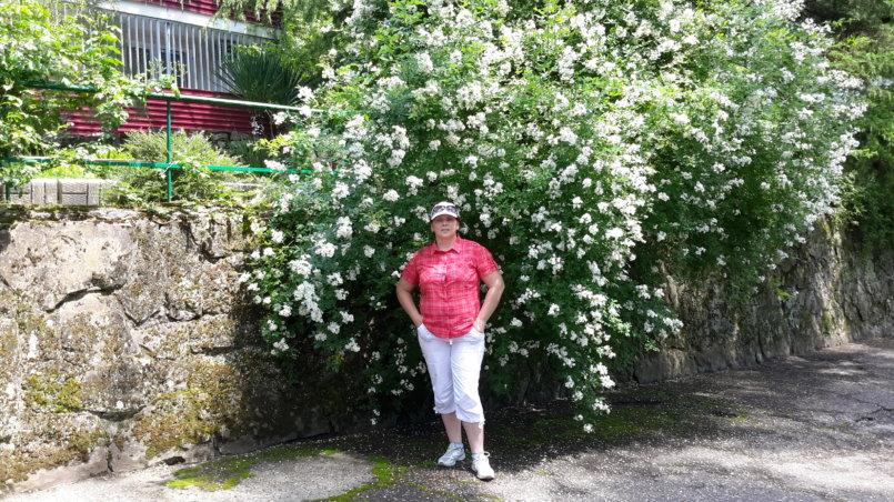 Фото на фоне белых цветов