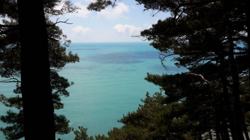 Сосны и море