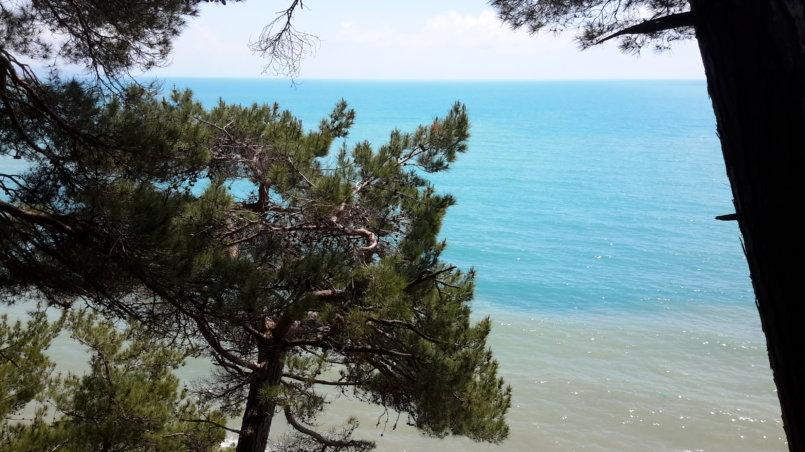 Сосна на фоне моря