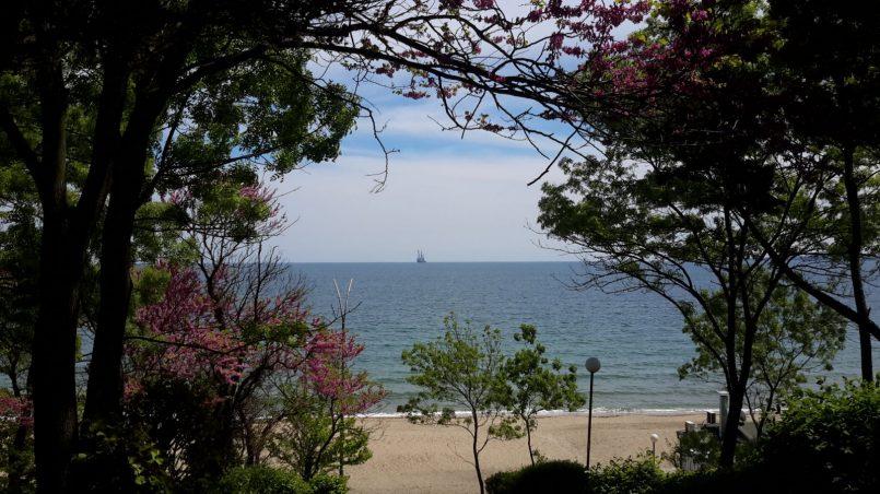 Вид моря через цветущие деревья