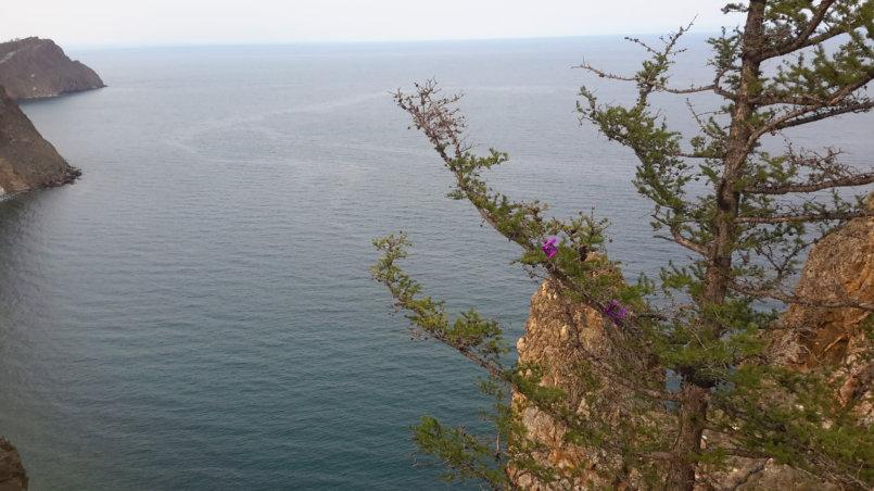 Ветка лиственницы на фоне Байкала