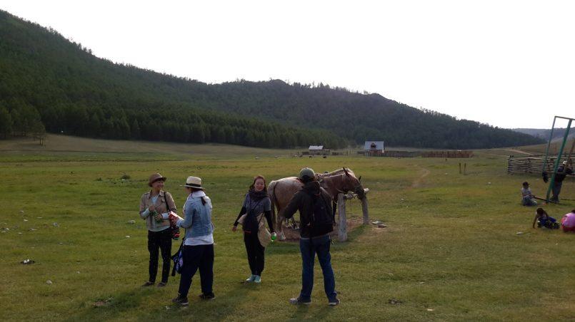 Лошади на привязи