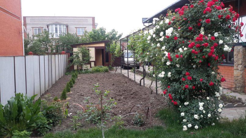 Розы и туи