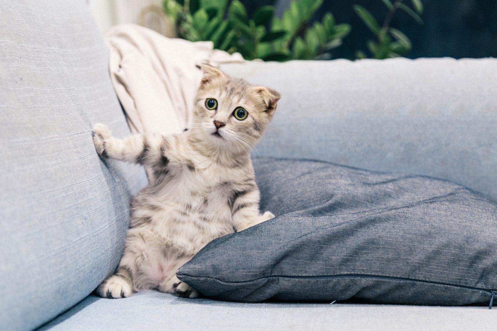 Котенок опирается на подушку