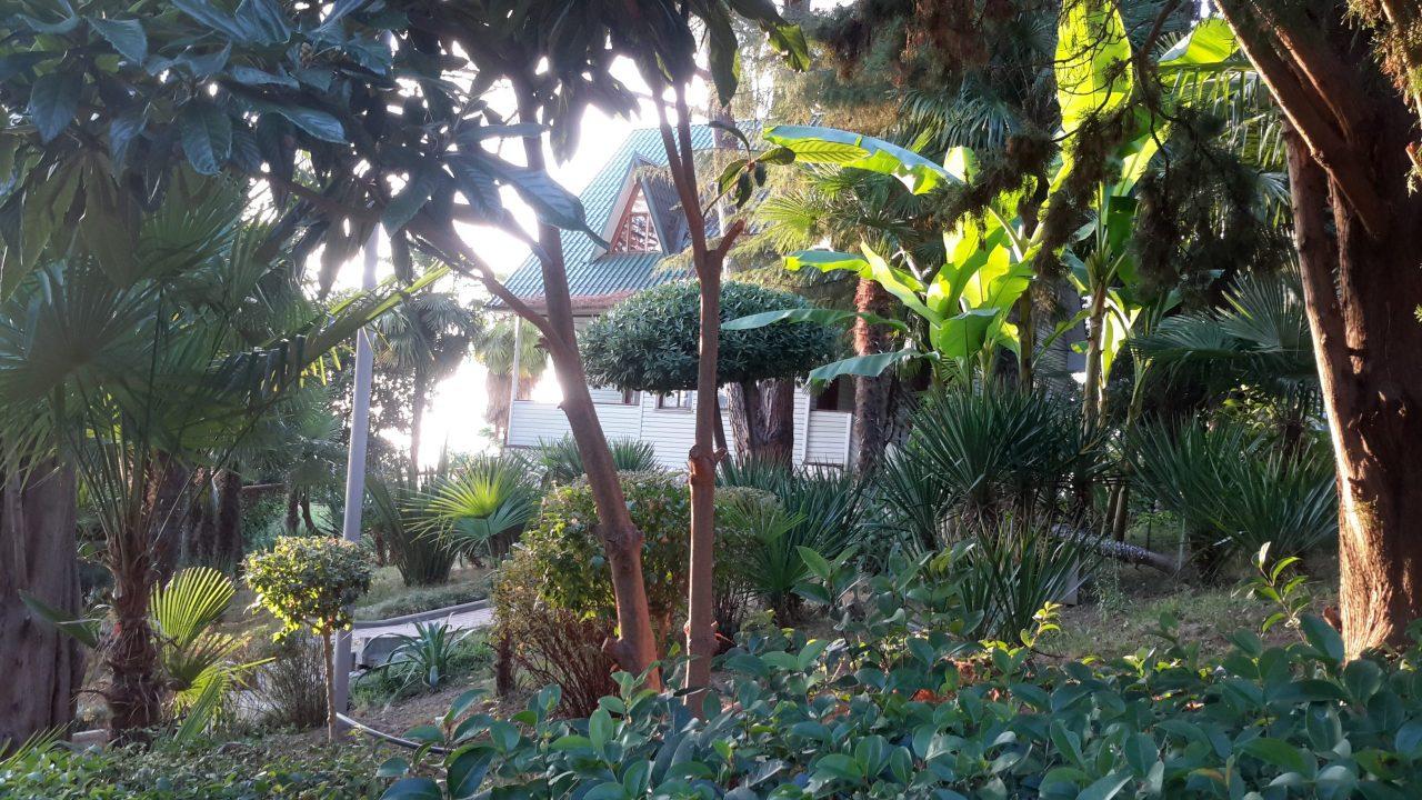 База отдыха Сочи. Пальмы.